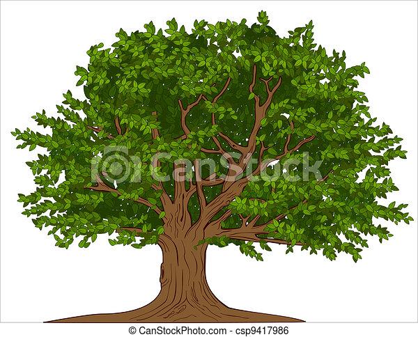 árvore grande - csp9417986