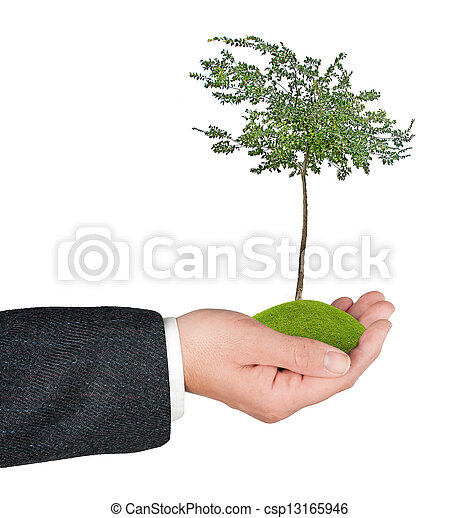 árvore, mão - csp13165946