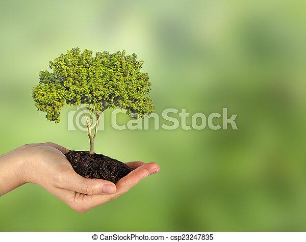 árvore, mão - csp23247835