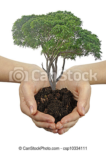 árvore, mãos - csp10334111