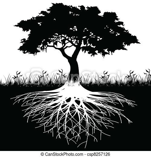 árvore, silueta, raizes - csp8257126