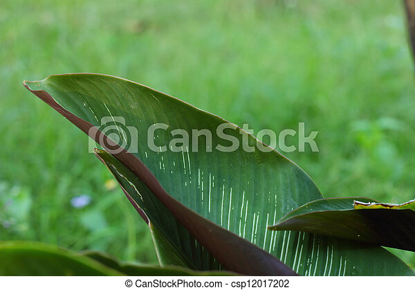 árvore verde - csp12017202