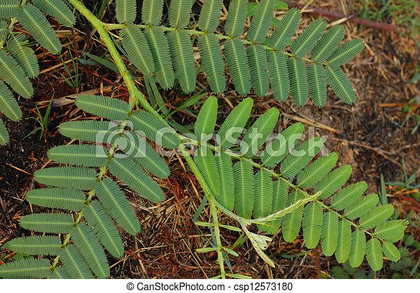 árvore verde - csp12573180