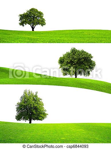 árvore verde, natureza - csp6844093