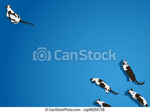 azul, andar, gato siamese, vetorial, fundo - csp66255738