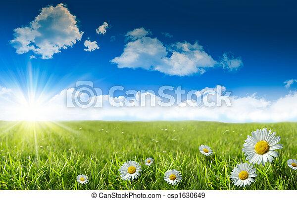 azul, grama selvagem, céu, margaridas - csp1630649