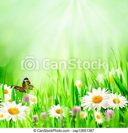 bonito, flores mola, chamomile, fundos - csp12651367