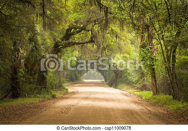 botânica, musgo, sujeira, ilha, carvalho, estrada, árvores, baía, plantação, viver, profundo, edisto, espanhol, sc, charleston, sul, floresta - csp11009078