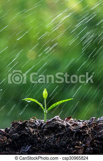 brotos, verde, chuva - csp30965824