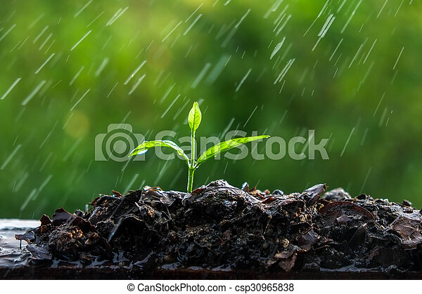 brotos, verde, chuva - csp30965838