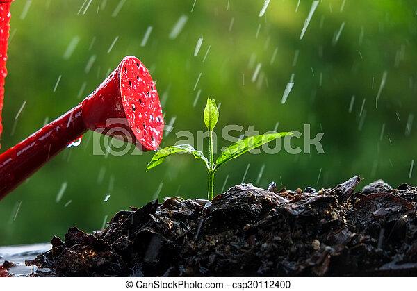 brotos, verde, chuva - csp30112400
