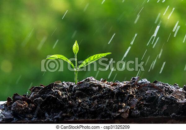 brotos, verde, chuva - csp31325209