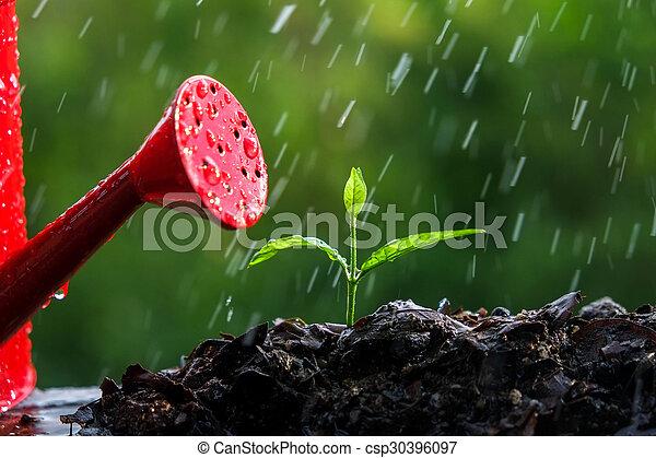 brotos, verde, chuva - csp30396097