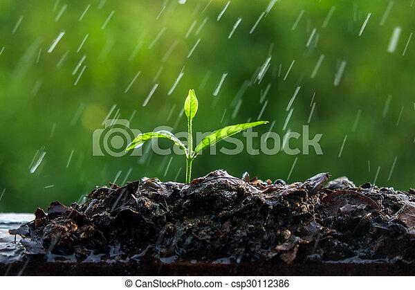 brotos, verde, chuva - csp30112386