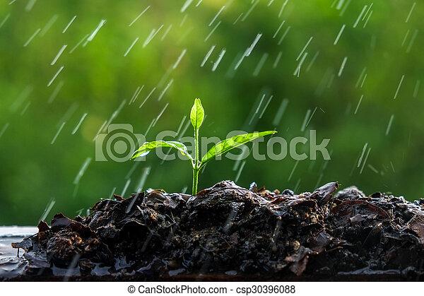 brotos, verde, chuva - csp30396088