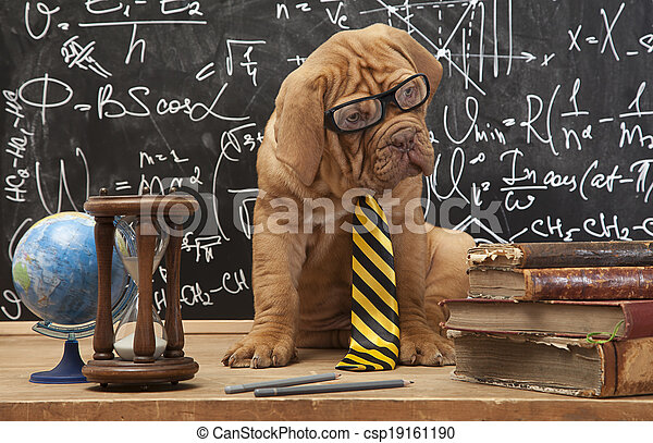 cão, educação - csp19161190