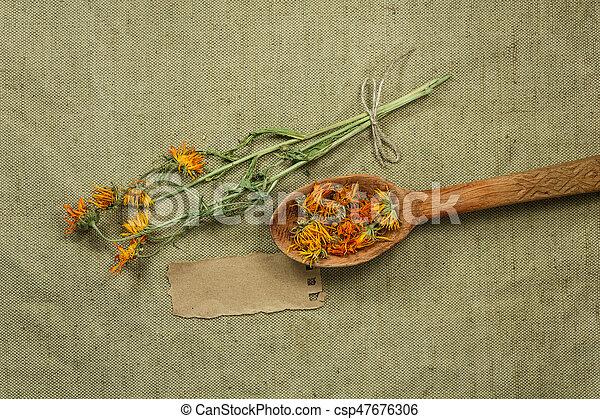 calendula., medicina, herbário, phytotherapy, secado, medicinal, herbs. - csp47676306