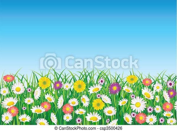campo, flor - csp3500426