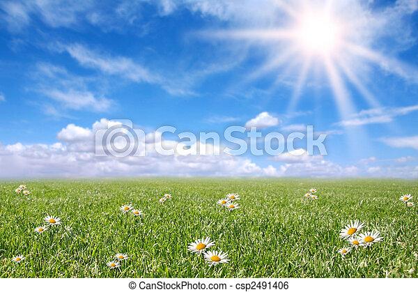 campo, primavera, ensolarado, sereno, prado - csp2491406