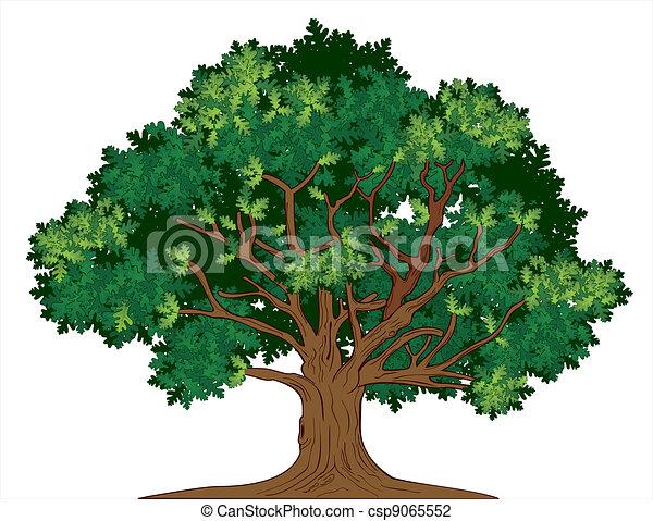 carvalho, vetorial, árvore - csp9065552