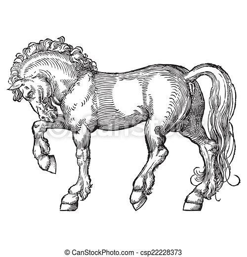 cavalo - csp22228373