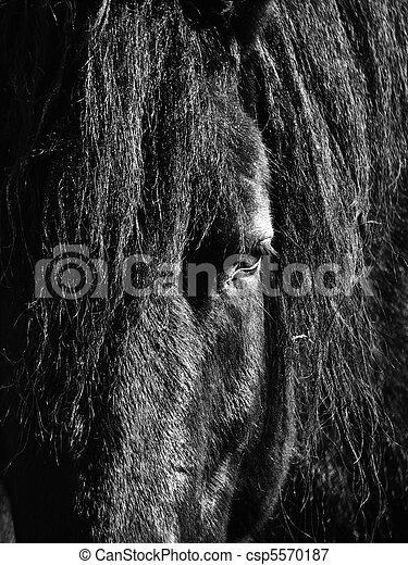 cavalo, pretas, cabeça - csp5570187