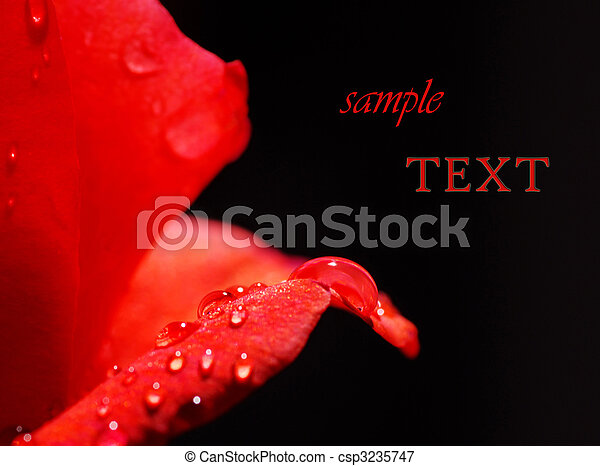close-up, bonito, rosa - csp3235747