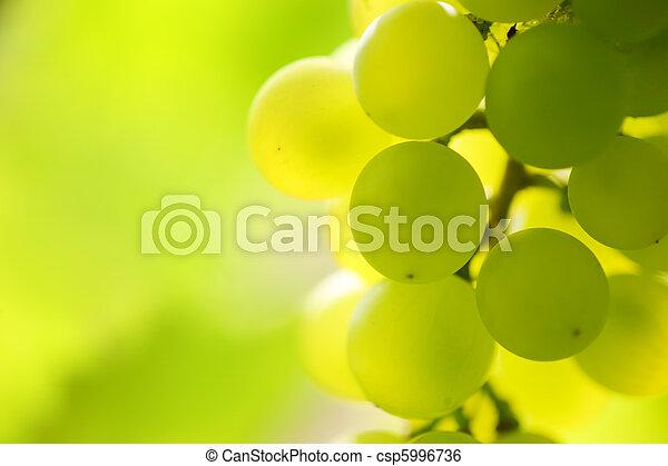 close-up, dof., videira, raso, vineyard., uvas, grupo - csp5996736