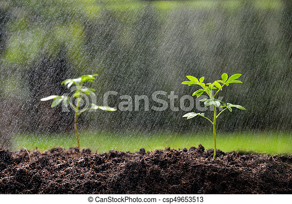 crescendo, chão, verde, chuva, seedling - csp49653513