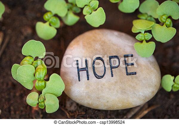 crescimento novo, esperança - csp13998524