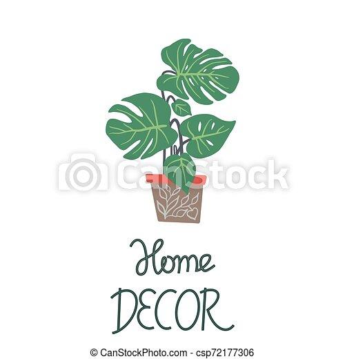 decoração, houseplant, folhas, nota, experiência., verde, grande, lar, branca, pote - csp72177306