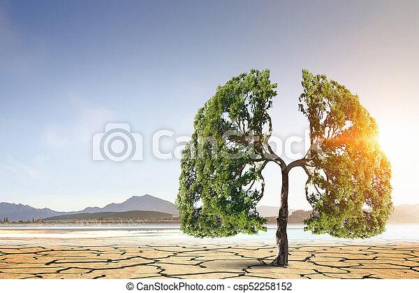 deserto, árvore, verde, só - csp52258152