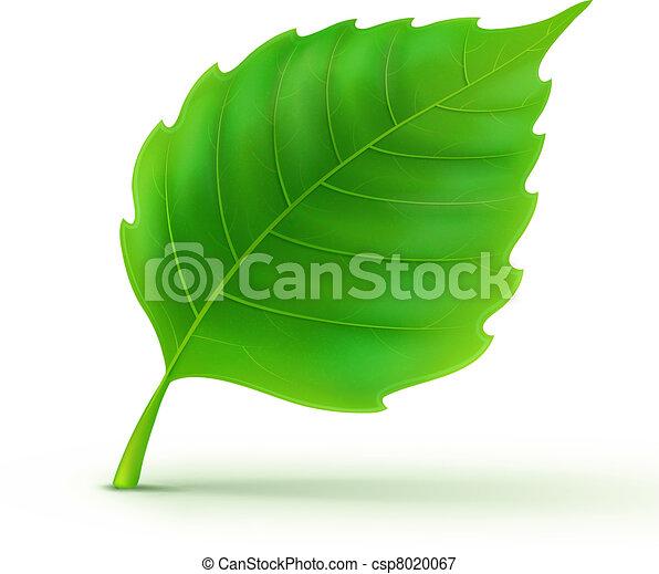 detalhado, folha verde - csp8020067