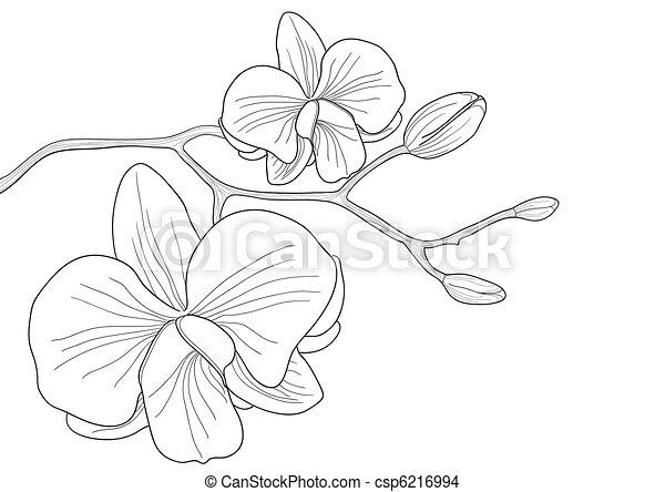 flor, orquídea - csp6216994