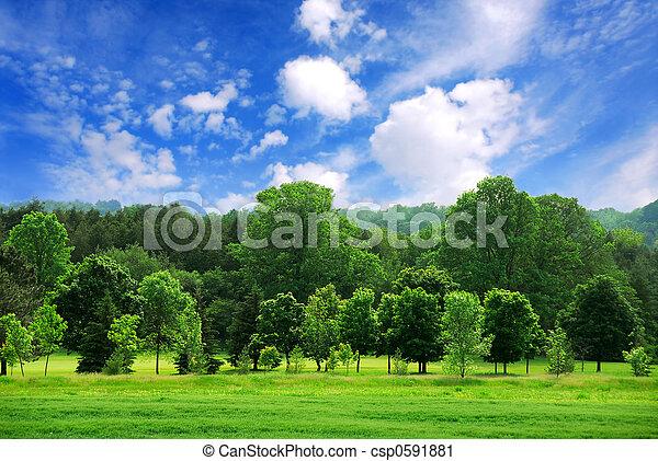 floresta verde - csp0591881