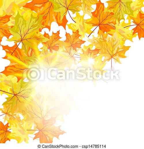 folhas, maple, outono - csp14785114