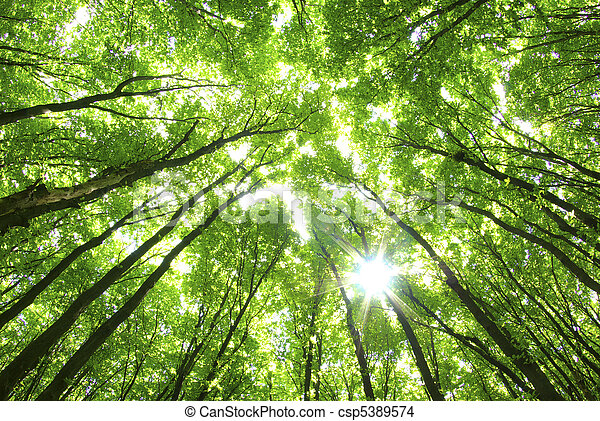 fundo, árvores verdes - csp5389574