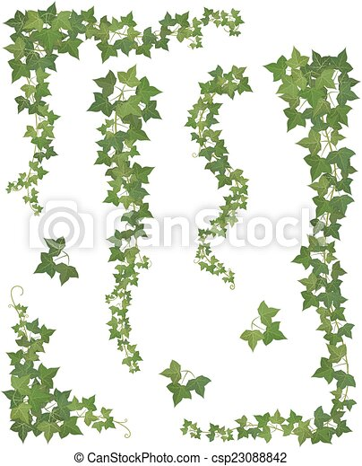 ivy., jogo, ramos, penduradas - csp23088842