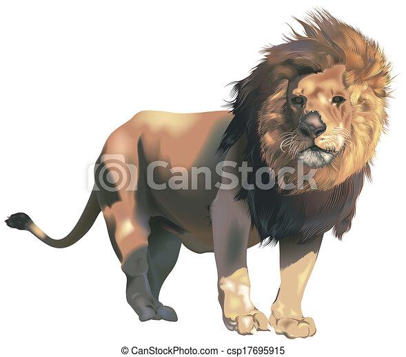 leão, macho - csp17695915