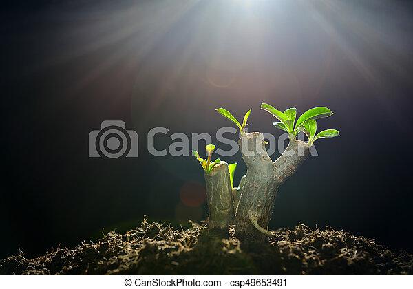 luz, árvore, manhã, ramo, broto, crescendo - csp49653491