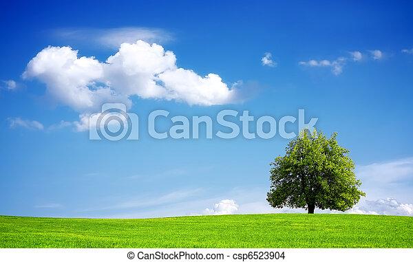 meio ambiente - csp6523904