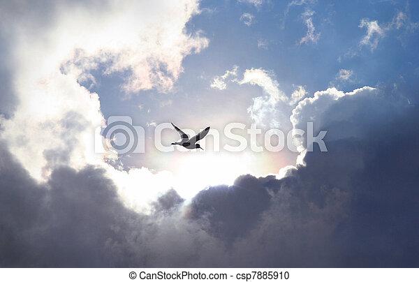 nuvem, brilhar, dramático, formação, simbólico, dá, vida, céu, hope., pássaro, trough, luz, experiência., voando, valor - csp7885910