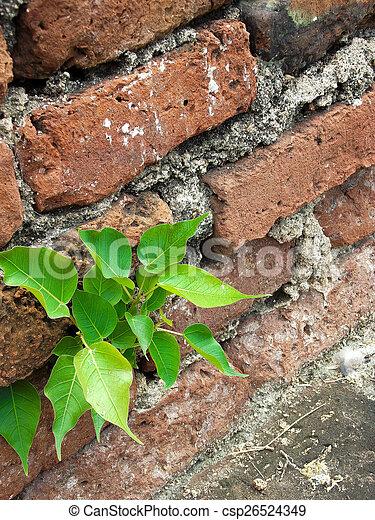 pequeno, planta - csp26524349