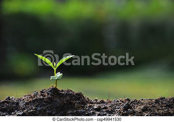 planta, luz, jovem, solo, manhã, (growing, seed) - csp49941530
