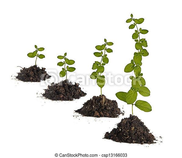 plantas, solo - csp13166033