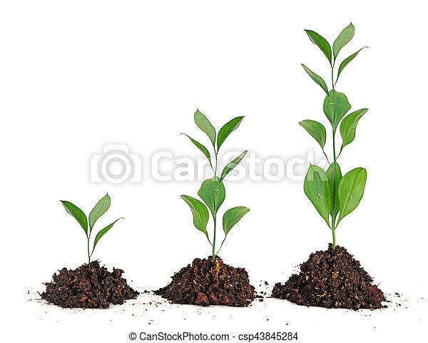 plantas, solo, três - csp43845284