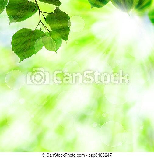 primavera, folhas, sol, verde, viga - csp8468247