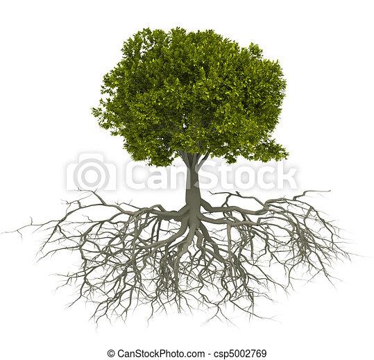raiz árvore - csp5002769