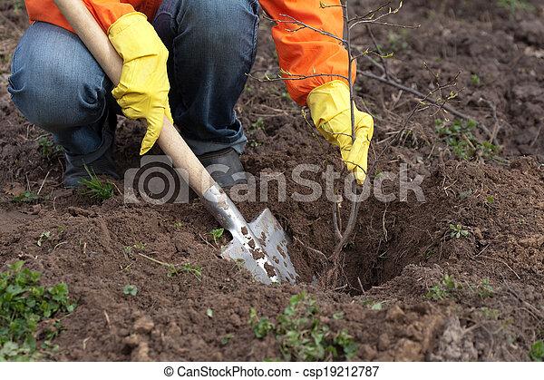 resetting, árvore, solo, jardineiro - csp19212787