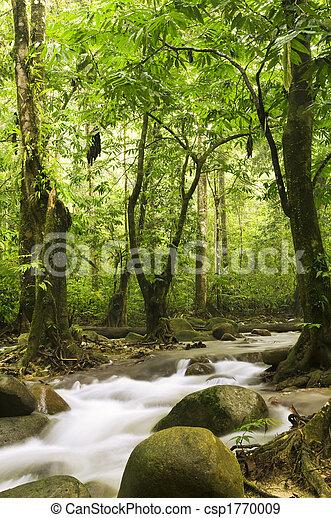 rio, floresta, verde - csp1770009